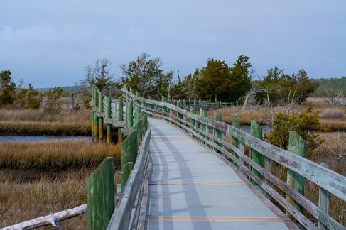 Croatan National Forest - Cedar Point 11 Feb at 13:58:00