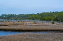 Croatan National Forest - Cedar Point 11 Feb at 13:59:06.