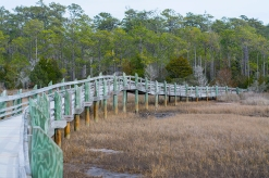 Croatan National Forest - Cedar Point 11 Feb at 14:00:58.