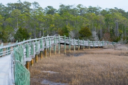 Croatan National Forest - Cedar Point 11 Feb at 14:00:58.
