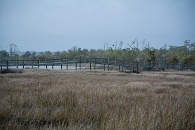 Croatan National Forest - Cedar Point 11 Feb at 14:11.35.