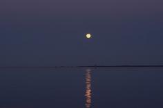 Moon Rise at 19:58:35 Full Moon 100% ISO 500 f/2.5 1/125