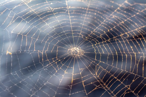 Spider web at 18:00:02 on 19 Oct Shutter Speed: 1/50 Aperture: f/3.5 ISO: 800