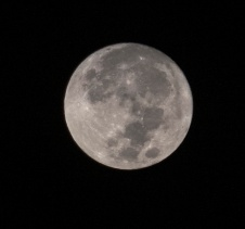 Harvest Moon taken at 05:48 on October 1st Shutter Speed: 1/1000 Aperture: f/5.6 ISO: 1250 Focal Length: 300mm