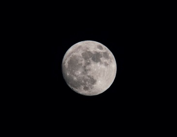 Taken on 28 November at 17:09 Shutter Speed: 1/125 Aperture: f/8 ISO: 200 Focal Length: 300mm